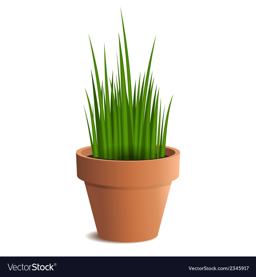 Green grass in a pot isolated on white background vector | Price: 1 Credit (USD $1)