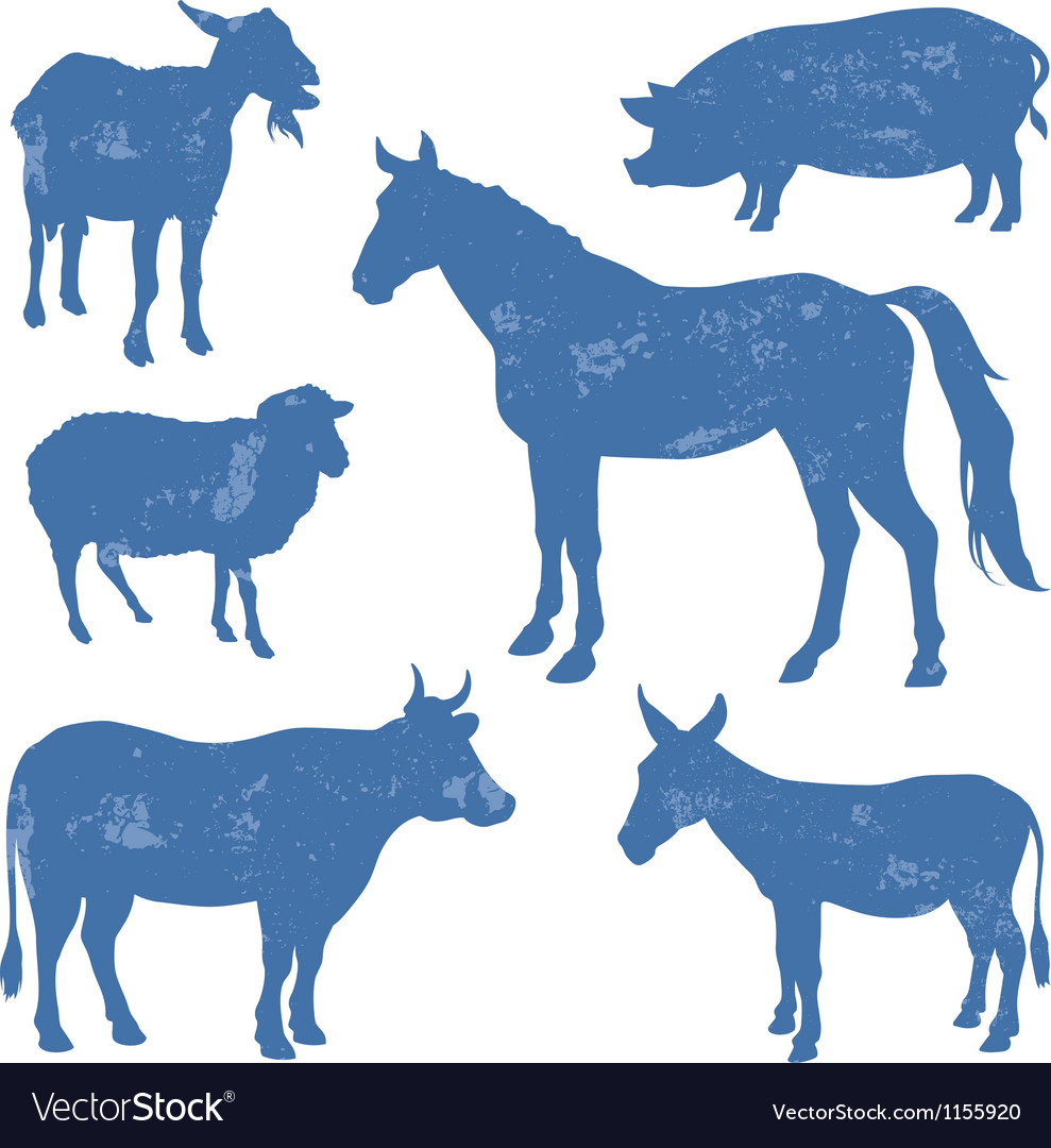 Livestock vector | Price: 1 Credit (USD $1)