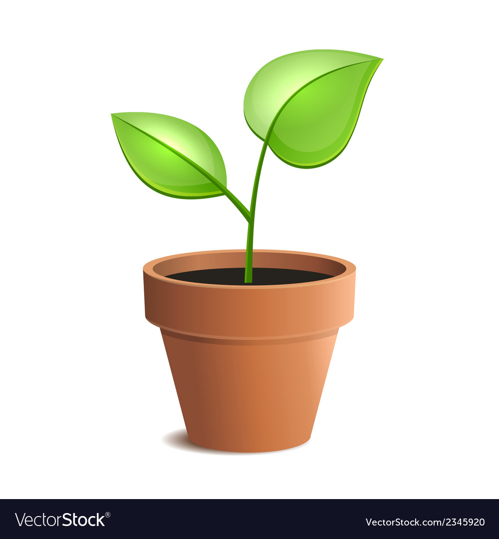 Young green plant in pot isolated on the white vector | Price: 1 Credit (USD $1)