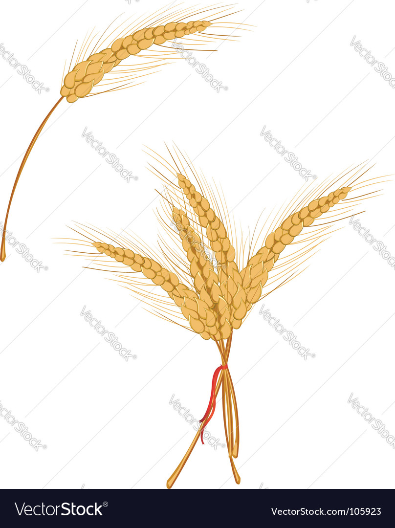 Wheat as agriculture symbol vector | Price: 1 Credit (USD $1)