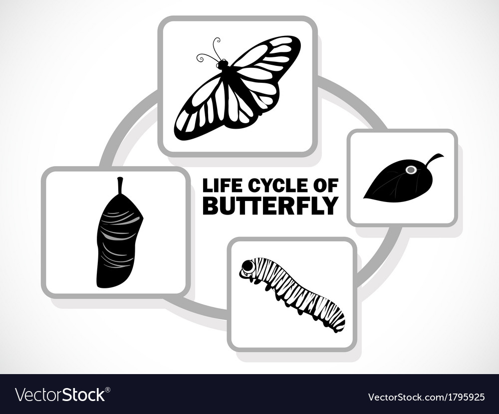 Butterfly life cycle vector | Price: 1 Credit (USD $1)