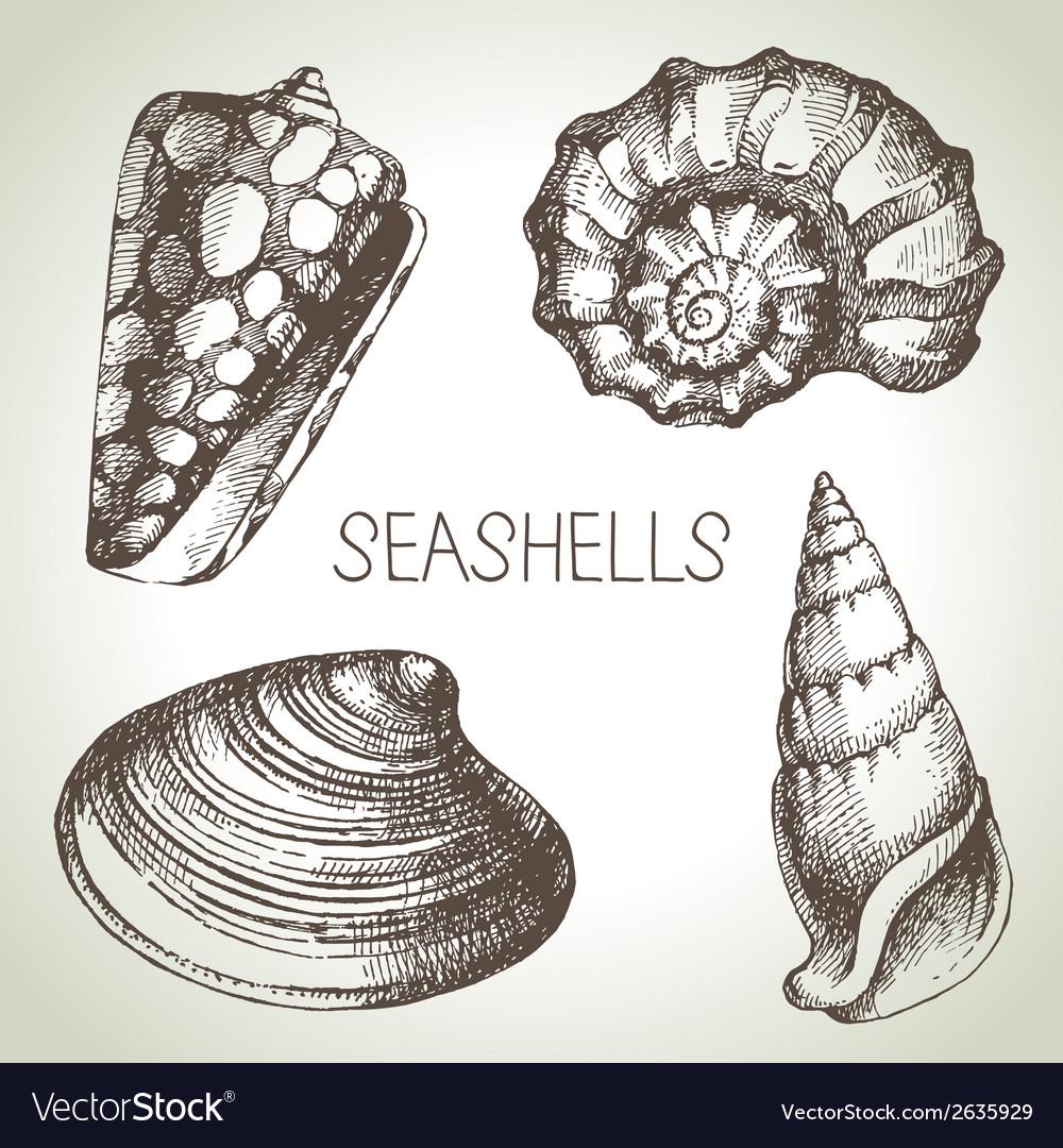 Seashells hand drawn set sketch design elements vector | Price: 1 Credit (USD $1)
