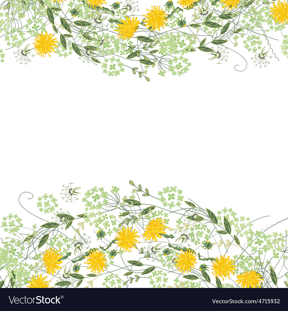 Detailed contour square frame with herbs daisy vector | Price: 1 Credit (USD $1)
