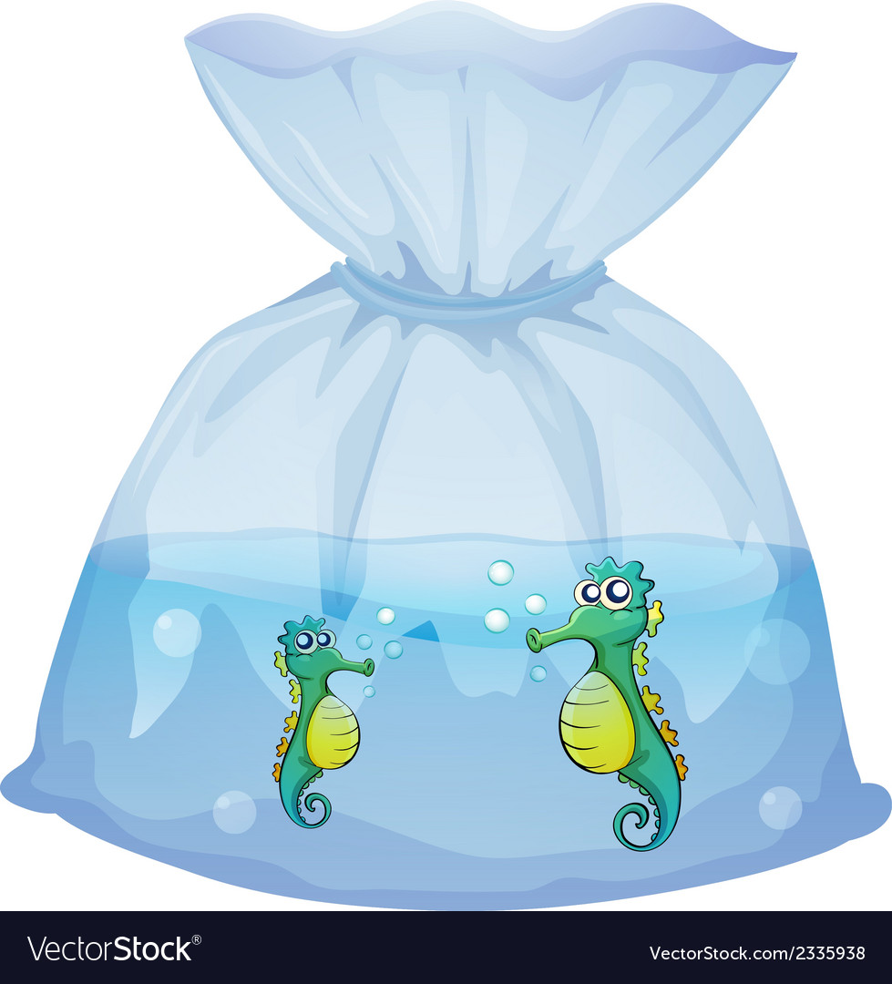 Seahorses inside the plastic pouch vector | Price: 1 Credit (USD $1)