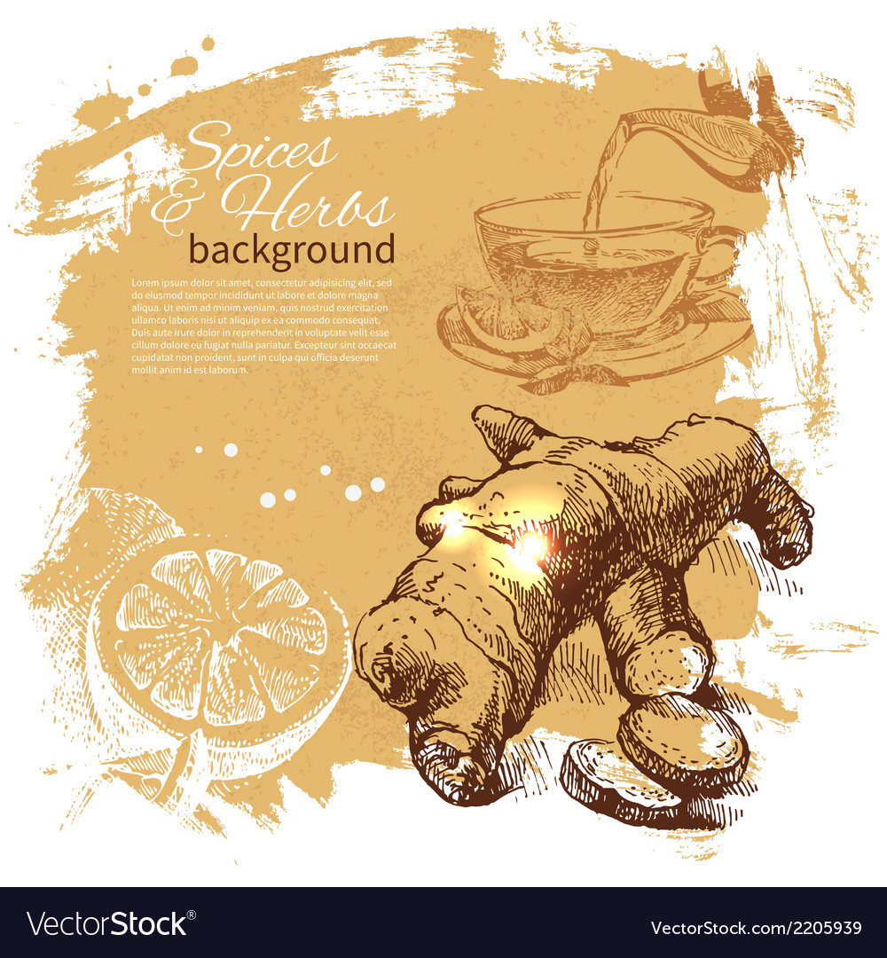 Vintage background with hand drawn sketch herbs vector   Price: 1 Credit (USD $1)