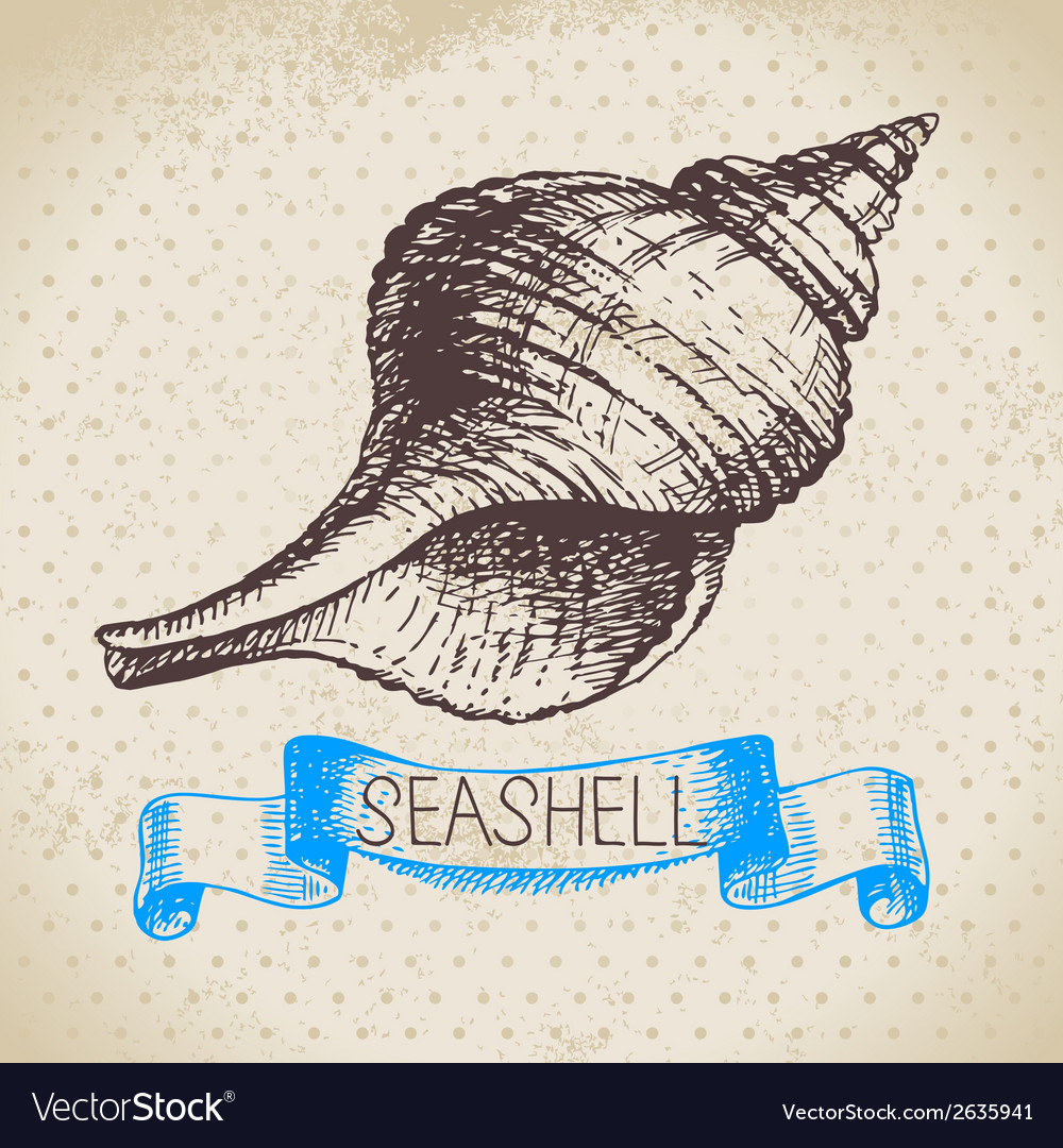 Seashells hand drawn sketch vector | Price: 1 Credit (USD $1)