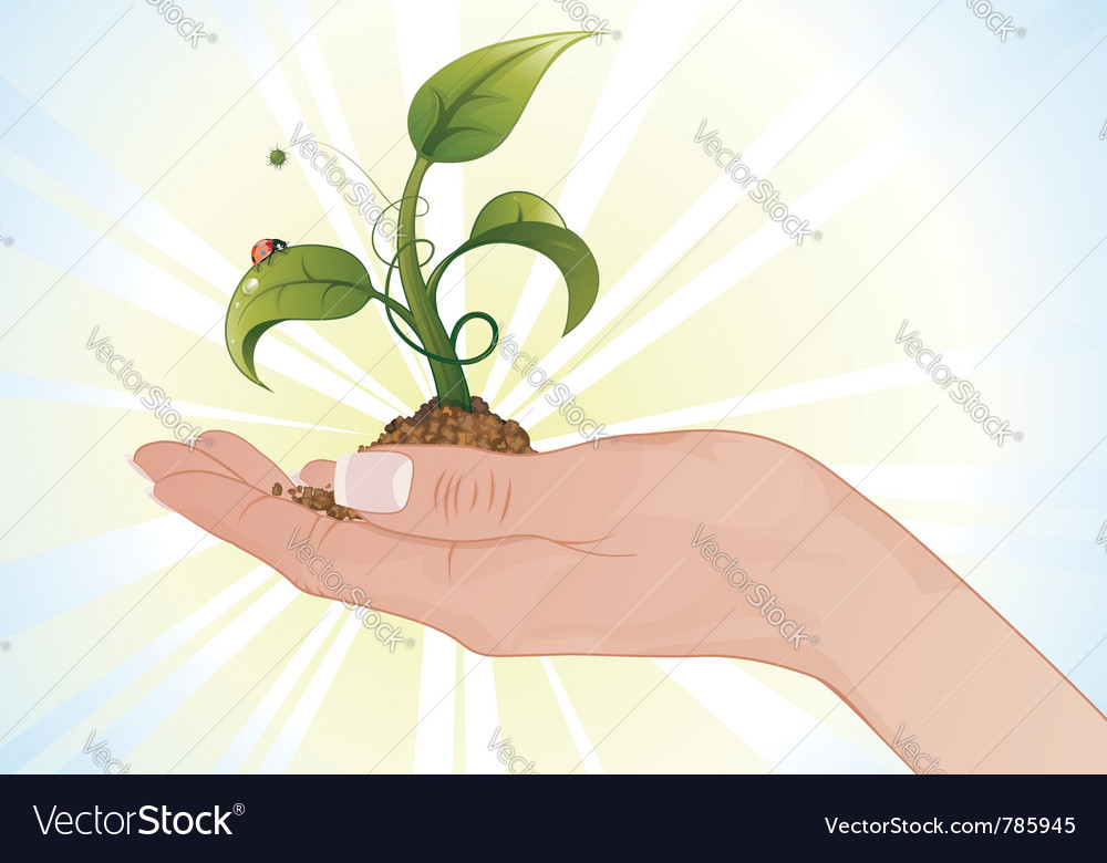 Hand with sprout vector | Price: 3 Credit (USD $3)