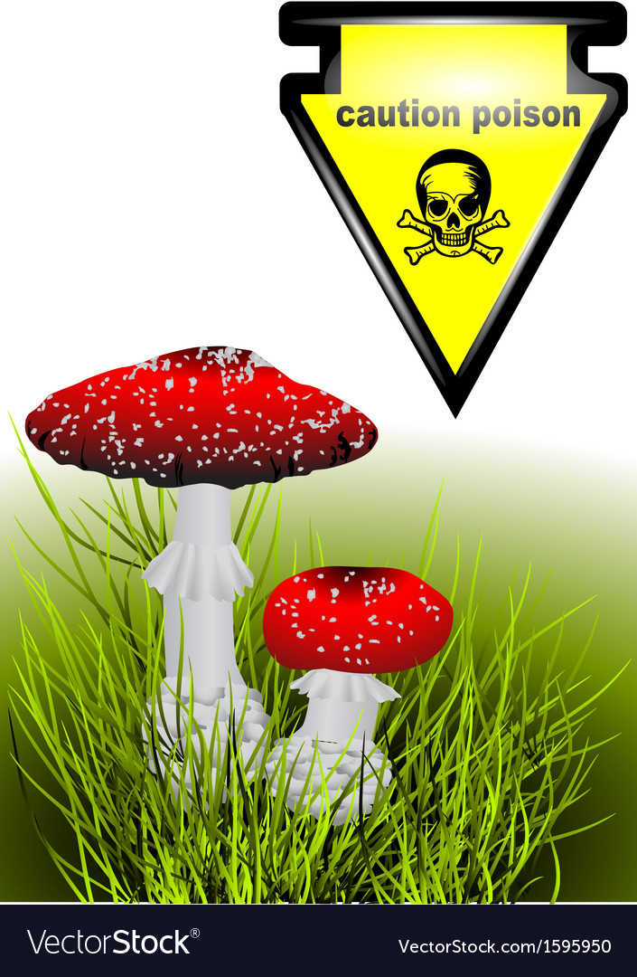 Poisonous mushrooms vector | Price: 1 Credit (USD $1)