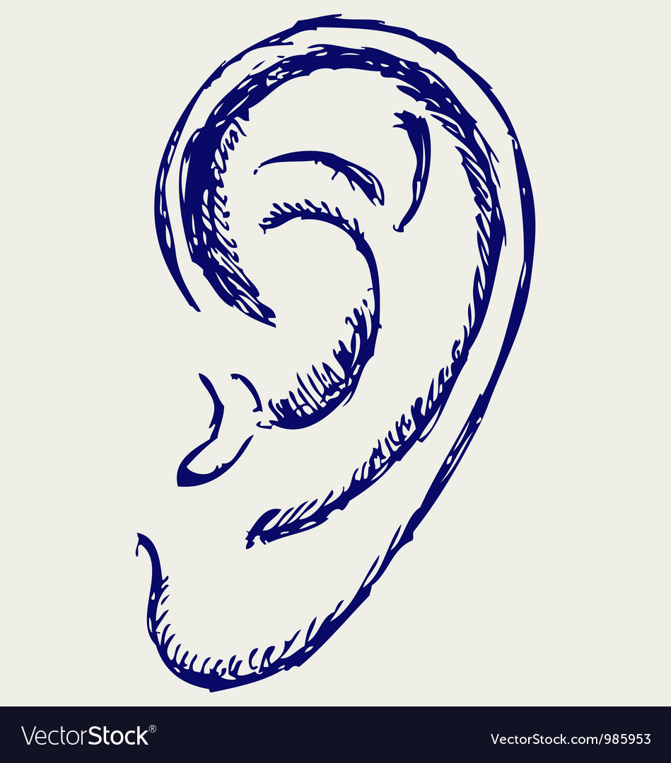 Human ear vector | Price: 1 Credit (USD $1)