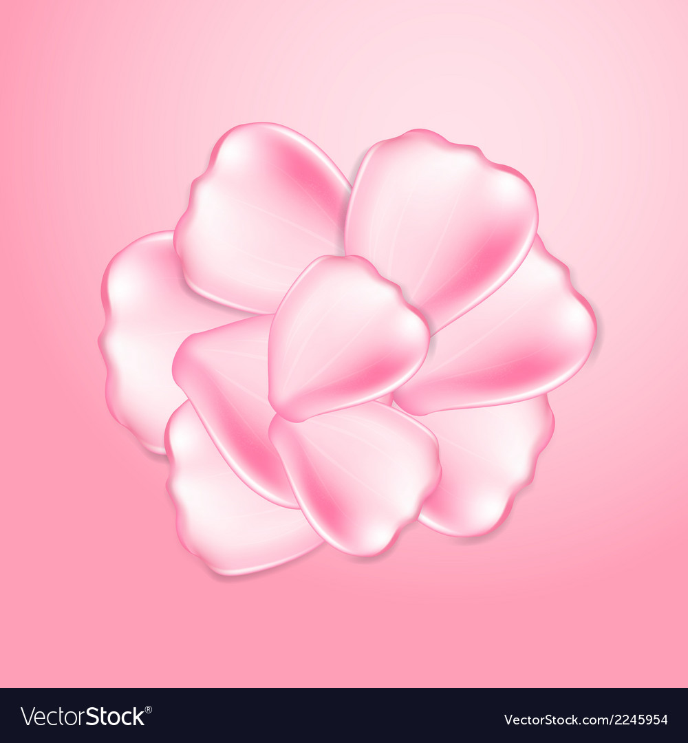 Beautiful pink rose petals vector | Price: 1 Credit (USD $1)