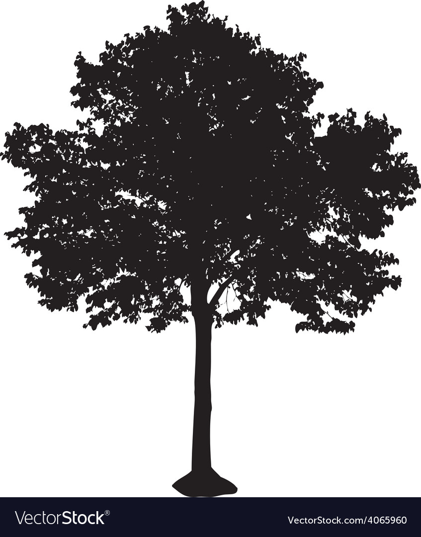 Tree silhouette vector   Price: 1 Credit (USD $1)