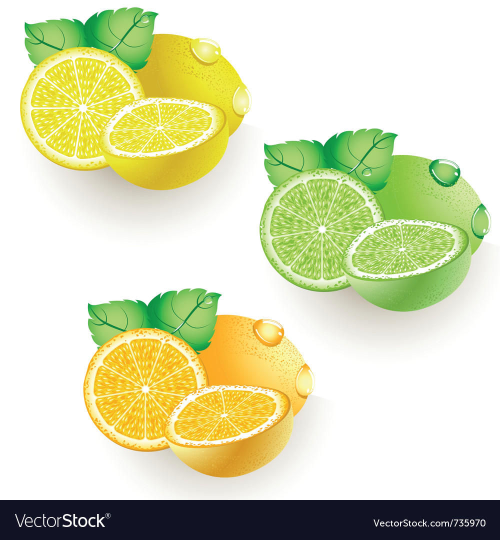 Ripe citrus vector | Price: 3 Credit (USD $3)