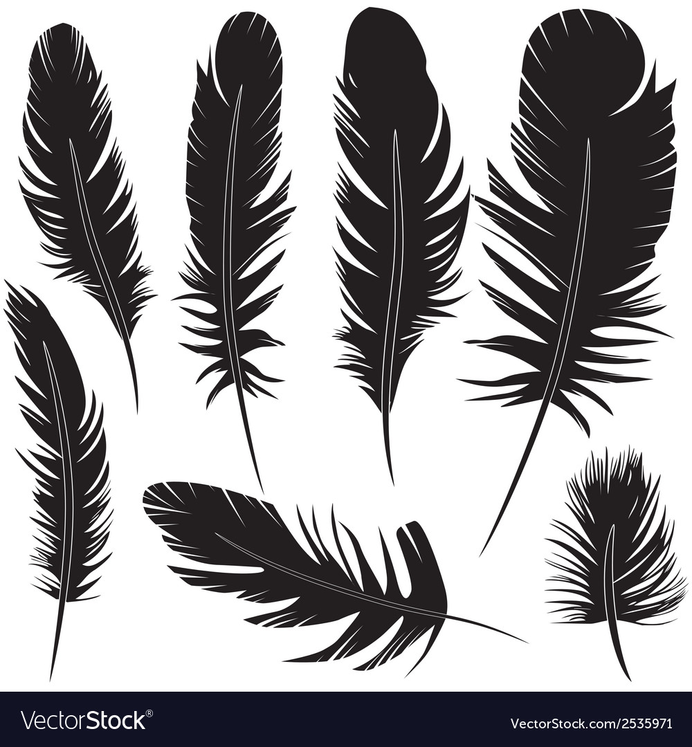 Feather of bird set vector | Price: 1 Credit (USD $1)