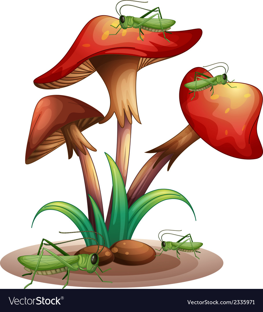 Mushrooms with grasshoppers vector | Price: 1 Credit (USD $1)