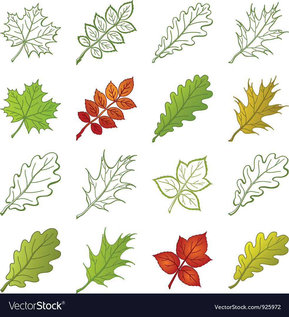 Leaves of plants and pictograms set vector | Price: 1 Credit (USD $1)
