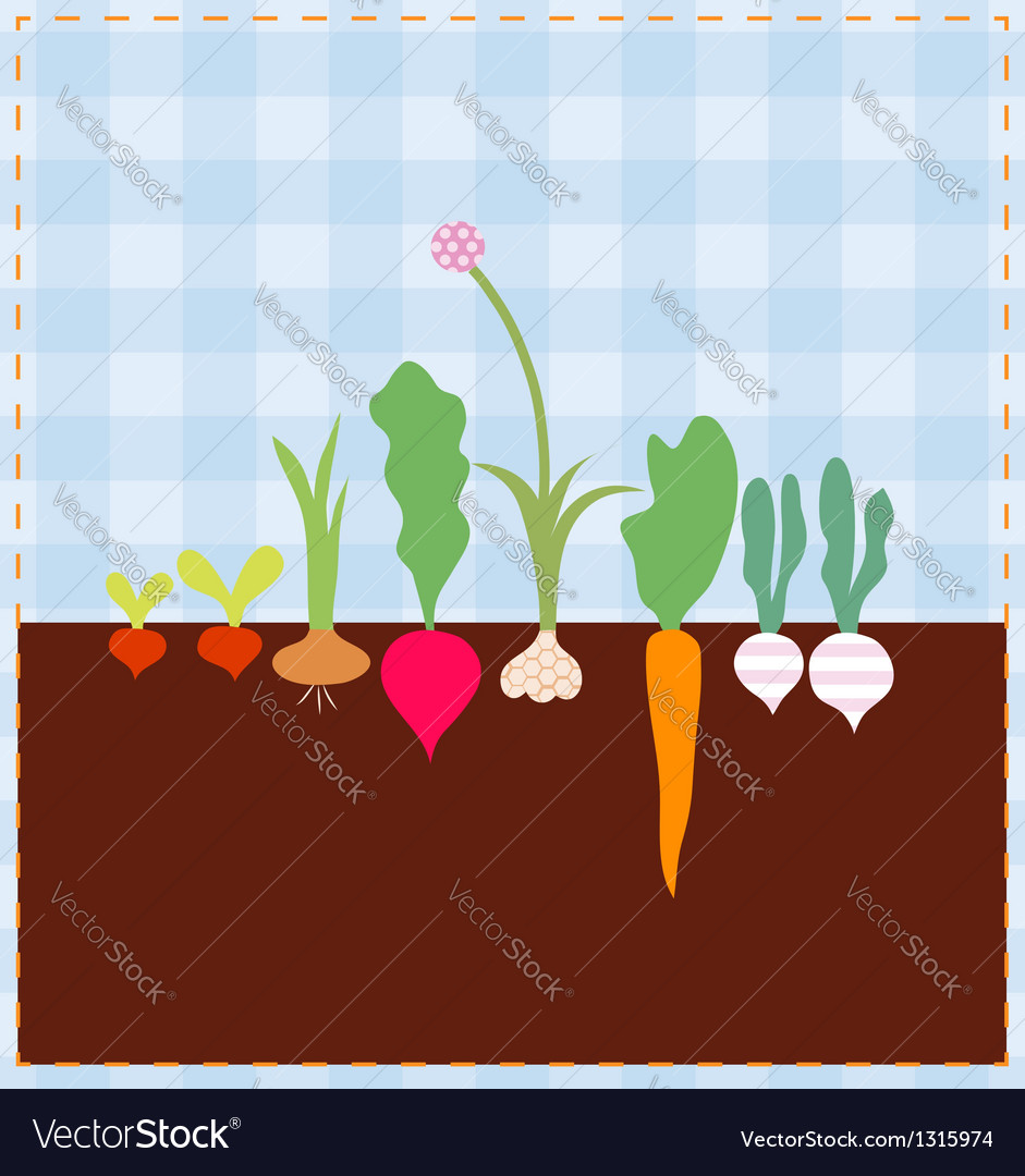 Vegetable bed vector | Price: 1 Credit (USD $1)