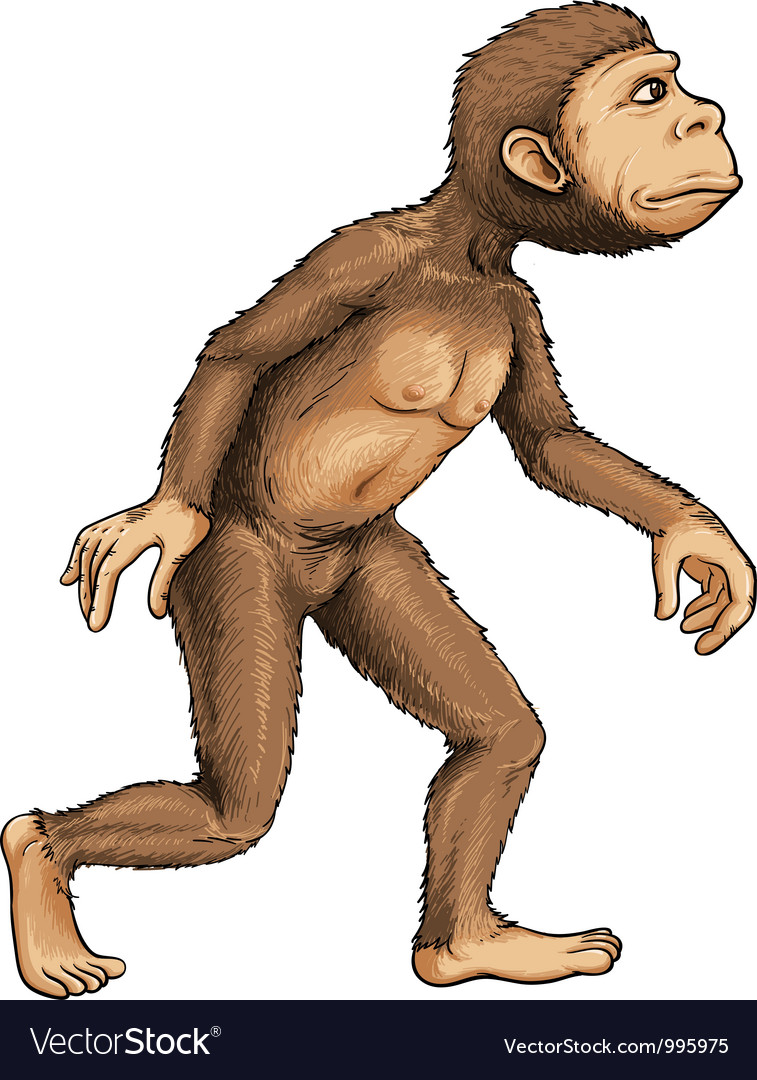 Evolving ape vector | Price: 3 Credit (USD $3)