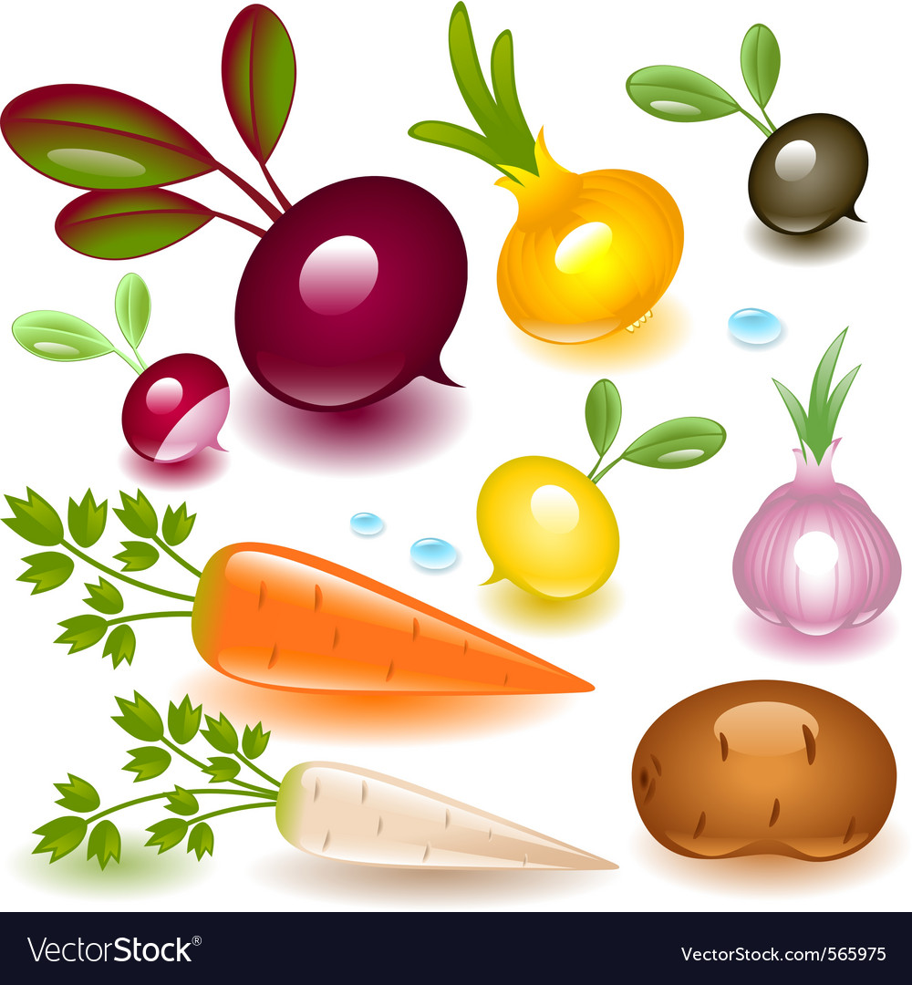 Vegetable root vector | Price: 3 Credit (USD $3)