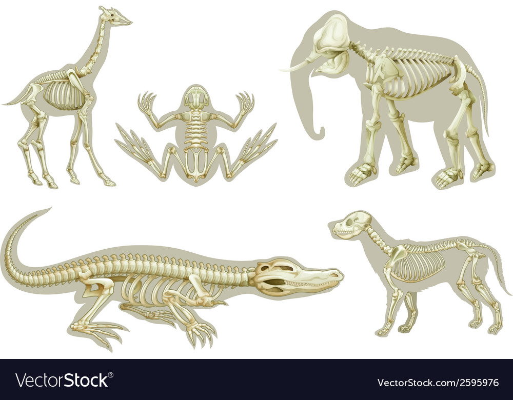 Skeletons of animals vector | Price: 3 Credit (USD $3)