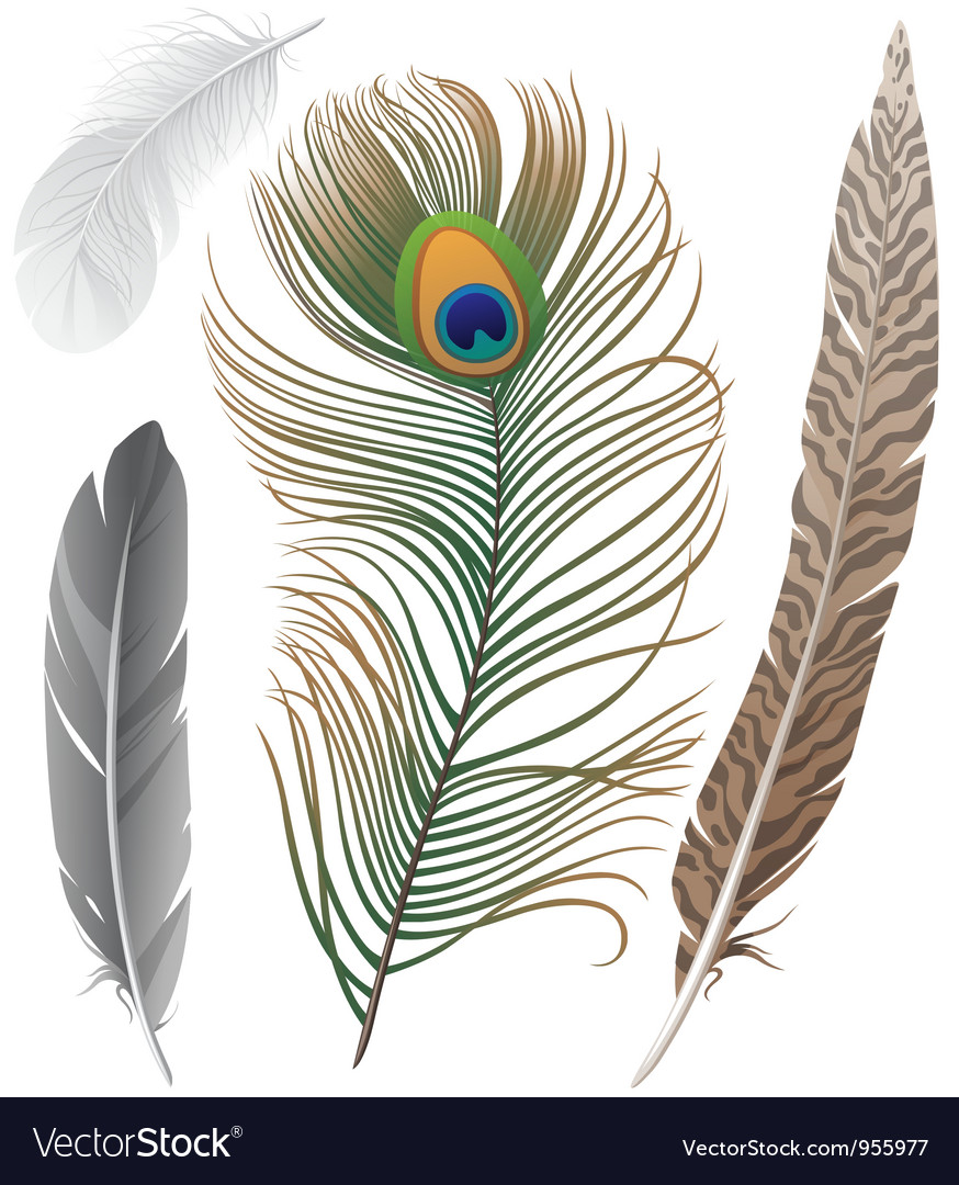 Feathers set vector | Price: 3 Credit (USD $3)