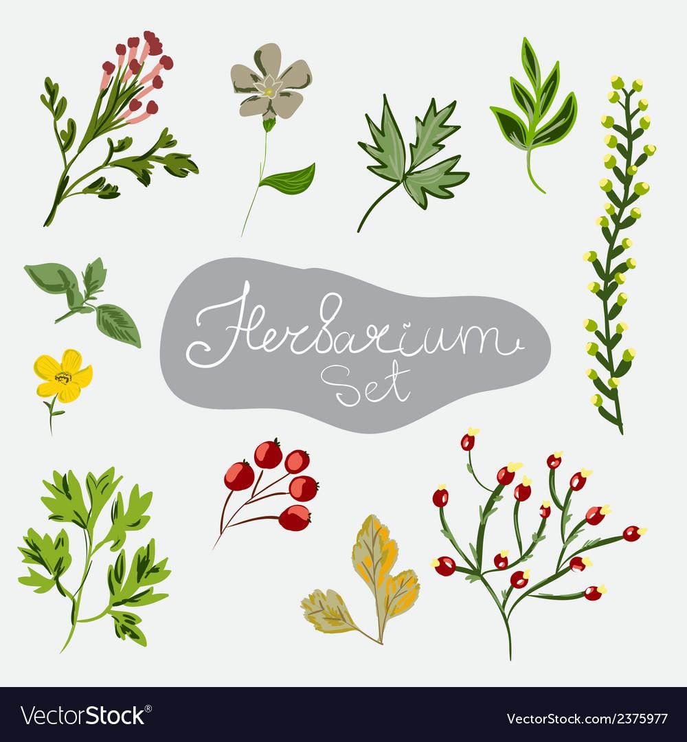 Herbarium set different plants vector | Price: 1 Credit (USD $1)