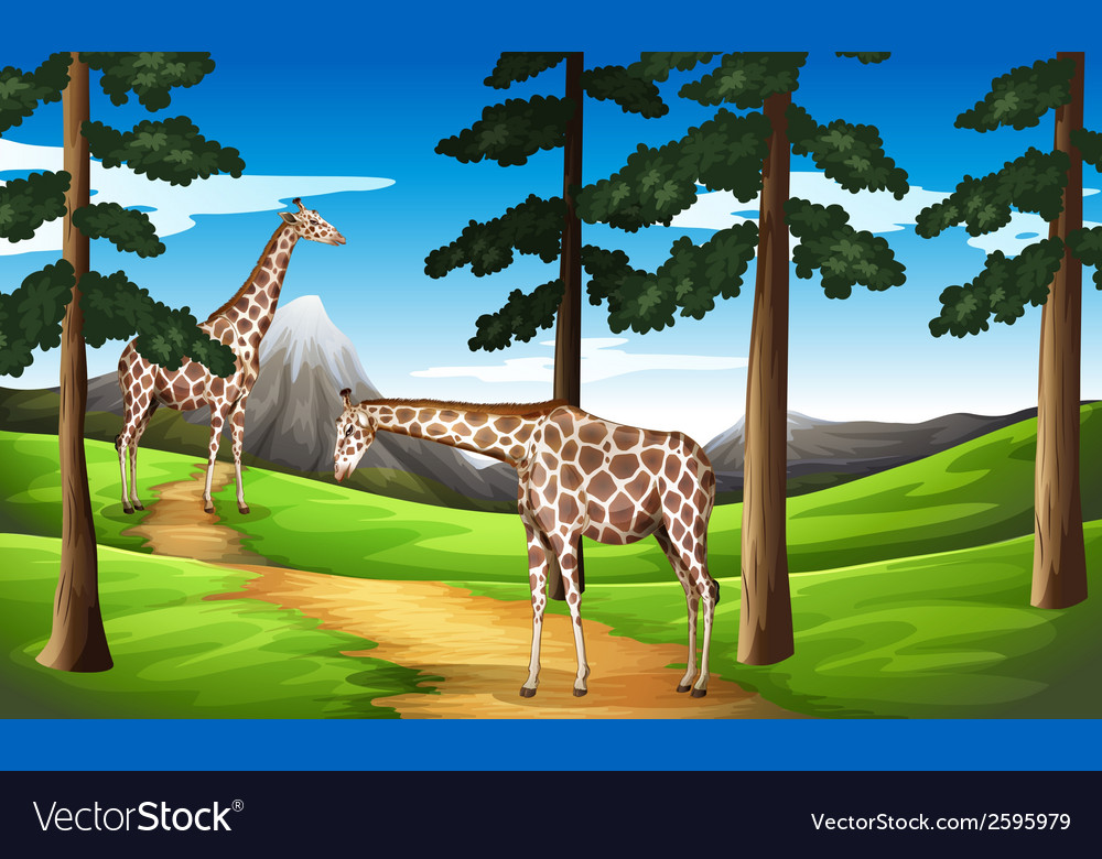 Giraffes in the forest vector | Price: 3 Credit (USD $3)