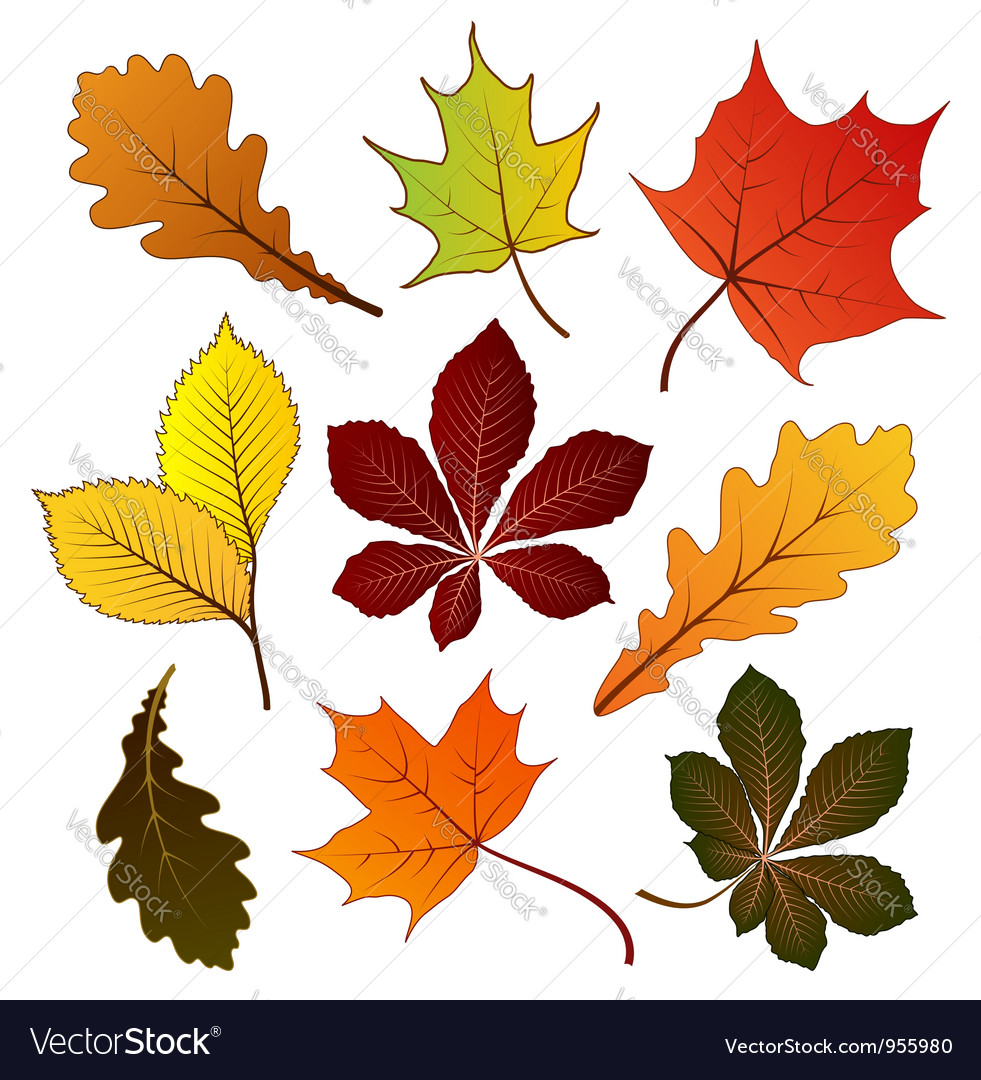 Autumn leaves icons vector | Price: 1 Credit (USD $1)