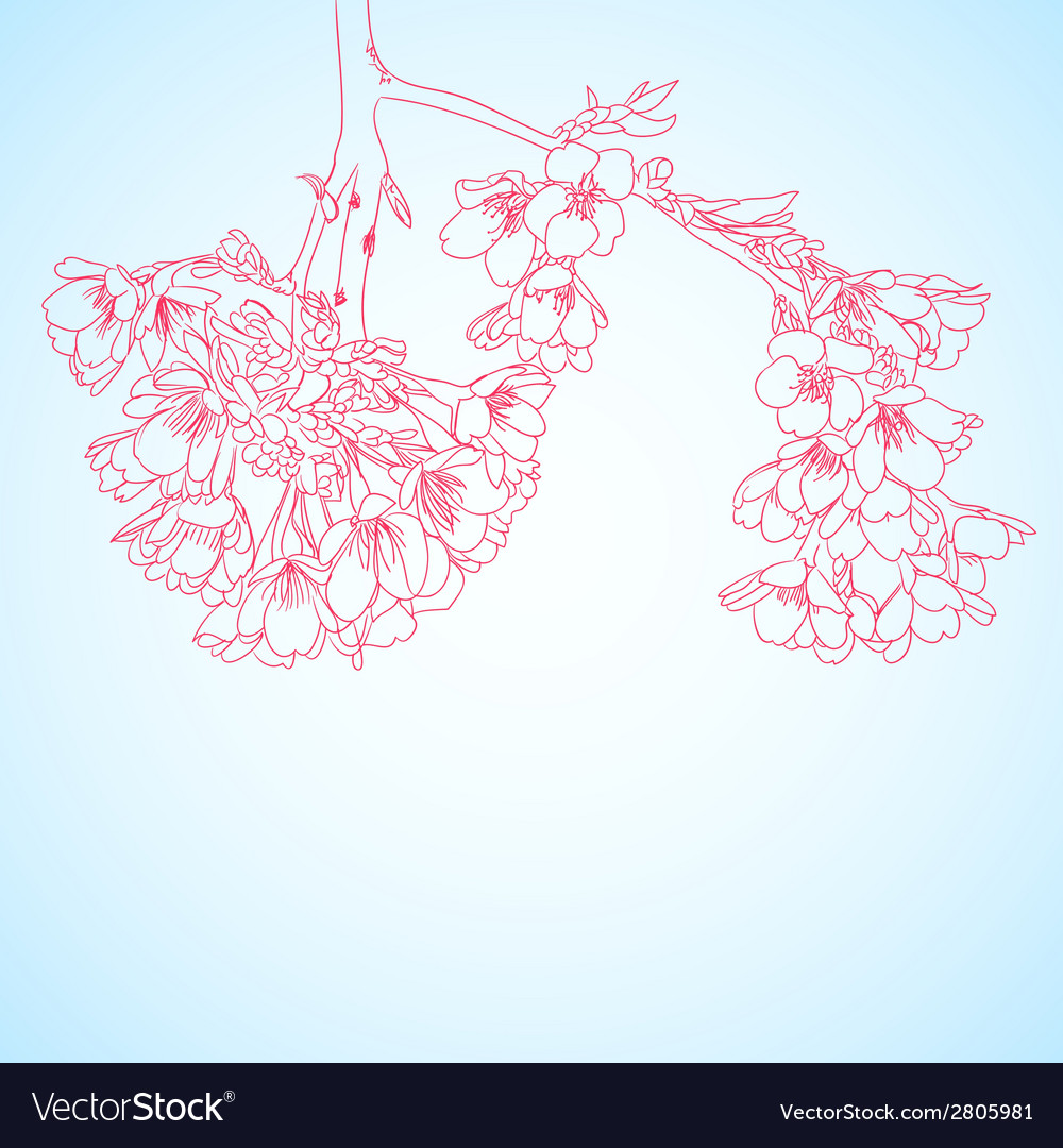 Outline cherry flowers vector | Price: 1 Credit (USD $1)