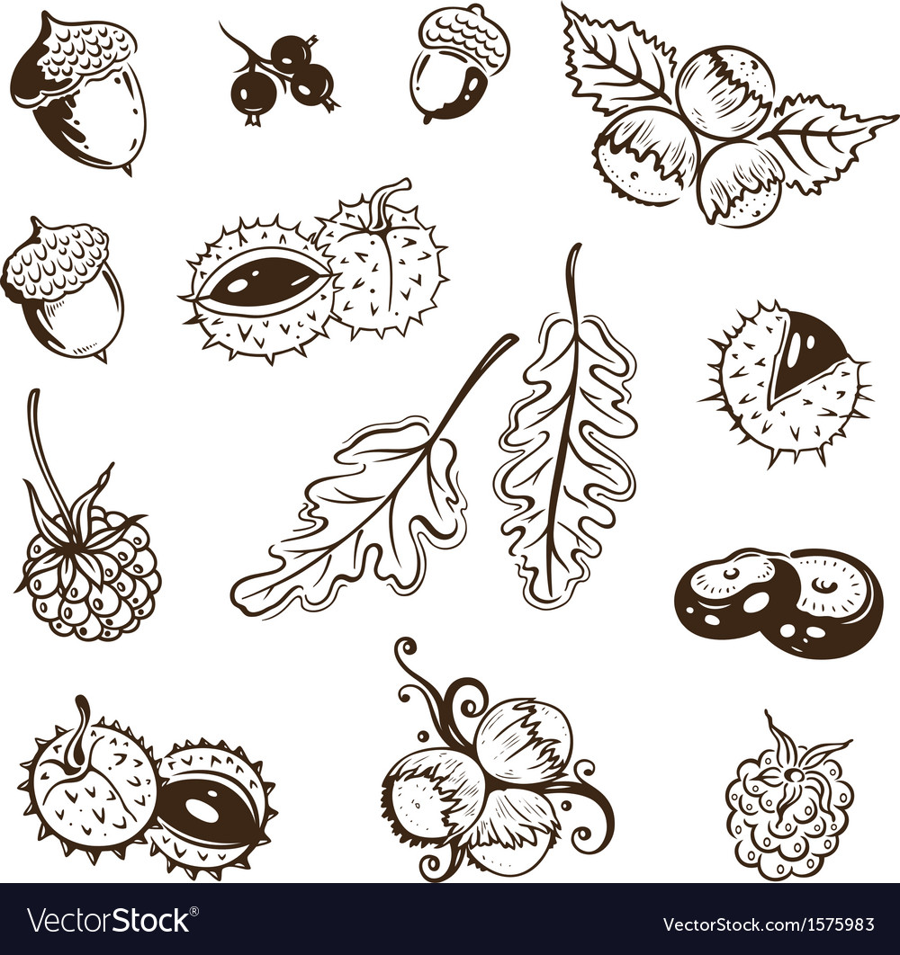 Autumn leaves nuts vector | Price: 1 Credit (USD $1)