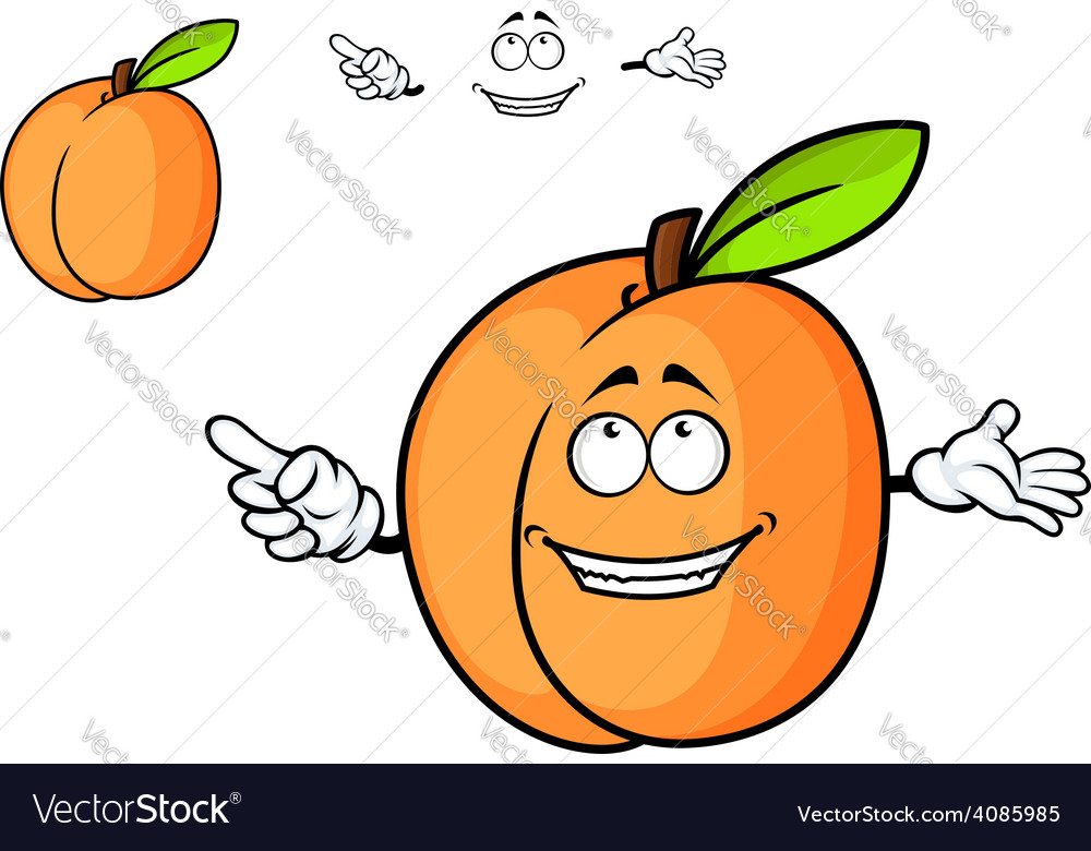 Cartoon juicy apricot fruit vector | Price: 1 Credit (USD $1)