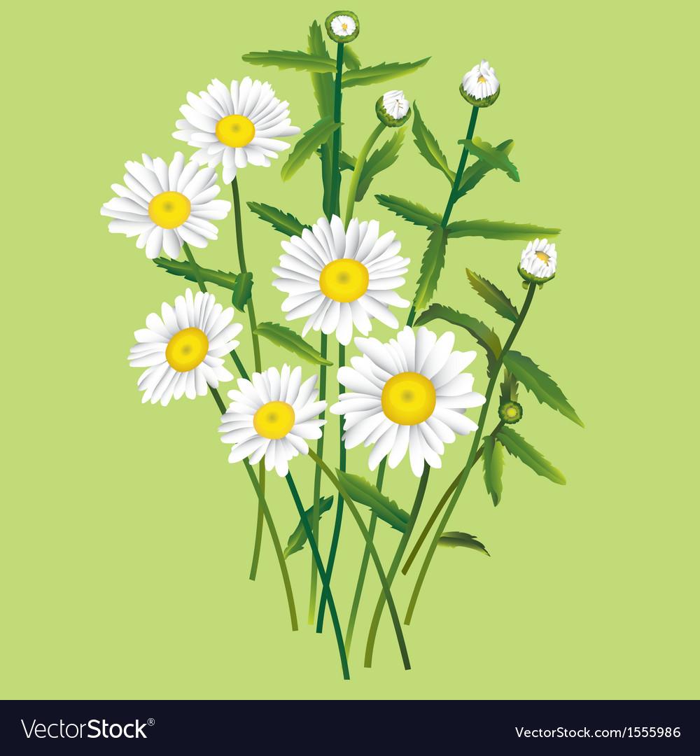 Camomile bouquet vector | Price: 1 Credit (USD $1)