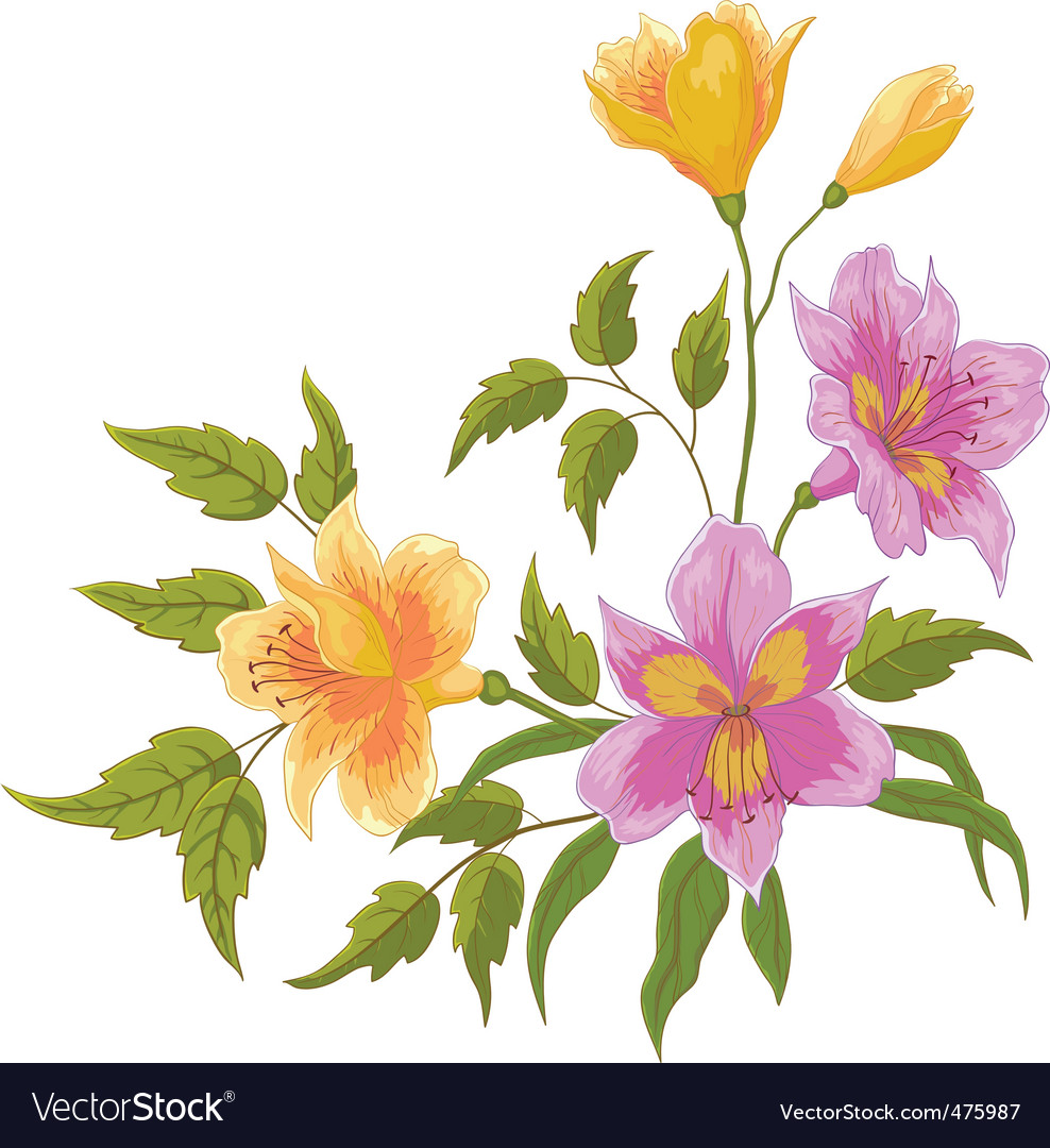 Flower alstroemeria vector | Price: 1 Credit (USD $1)