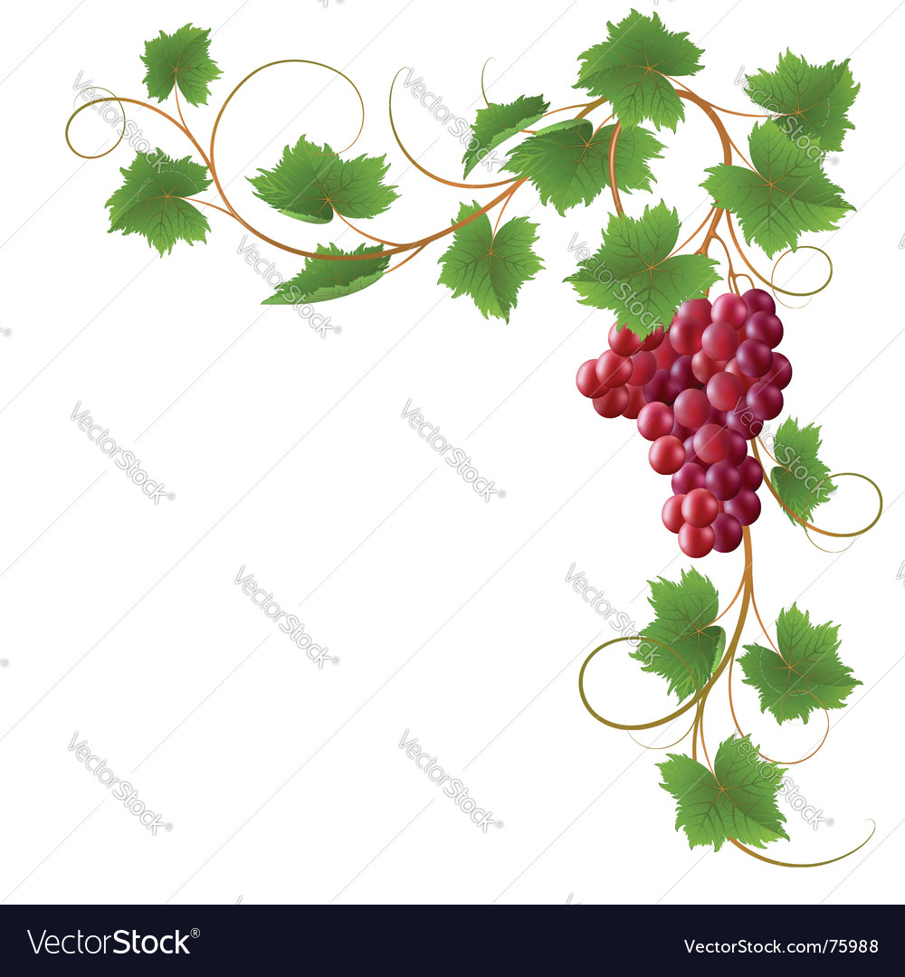 Vine vector | Price: 1 Credit (USD $1)