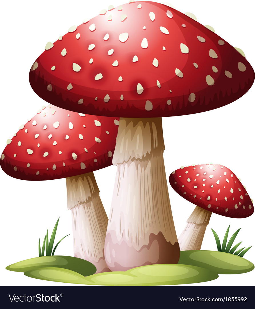 Red mushroom vector | Price: 1 Credit (USD $1)