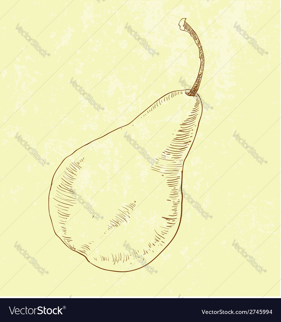 Pear fruit - vintage vector | Price: 1 Credit (USD $1)