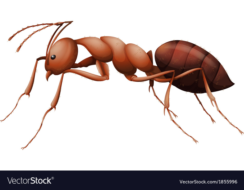 The ant vector | Price: 1 Credit (USD $1)