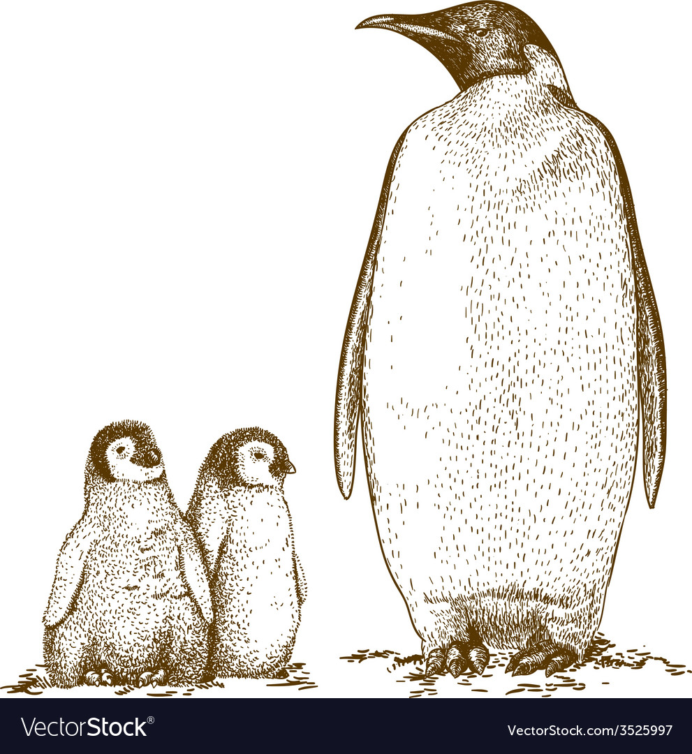 Engraving penguins vector | Price: 3 Credit (USD $3)