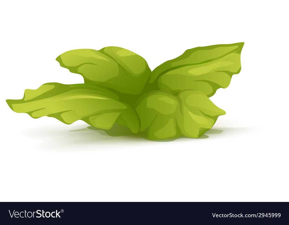 Bush plant with large leaves vector | Price: 1 Credit (USD $1)
