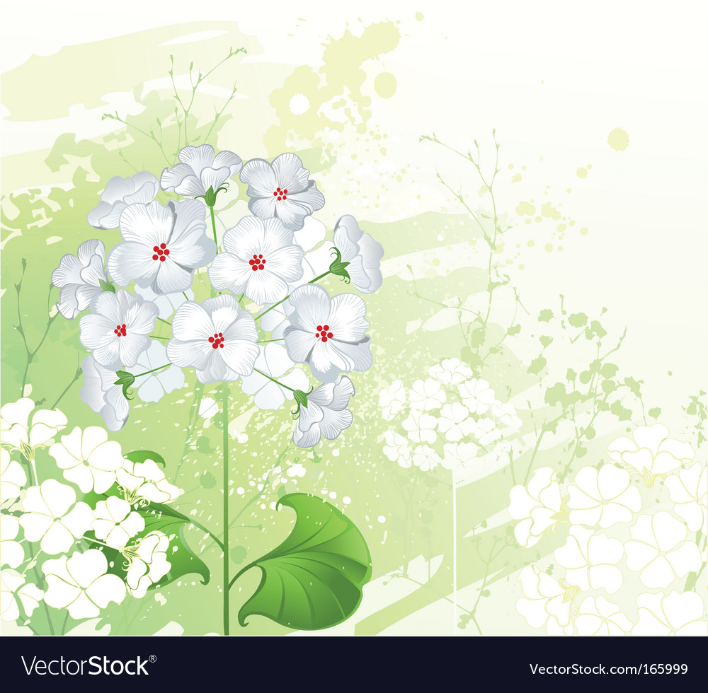 White wild flowers vector | Price: 1 Credit (USD $1)