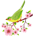 Spring bird vector