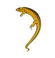Lizard vector
