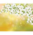Spring blossom trees vector