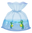 Seahorses inside the plastic pouch vector