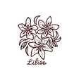 Handsketched bouquet of lilies vector