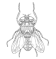 Common housefly outline vector