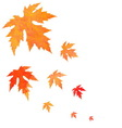 Watercolor painted orange leaves fall vector