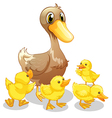 The brown duck and her four yellow ducklings vector