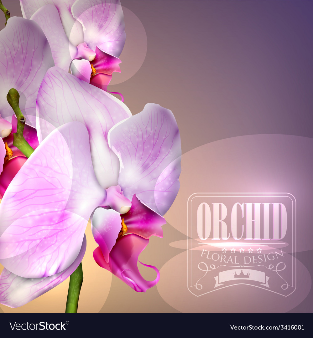 Flower background with blossom orchid vector | Price: 1 Credit (USD $1)