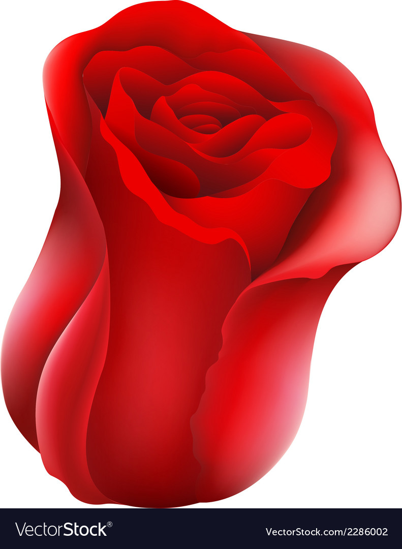 A red rose vector | Price: 1 Credit (USD $1)