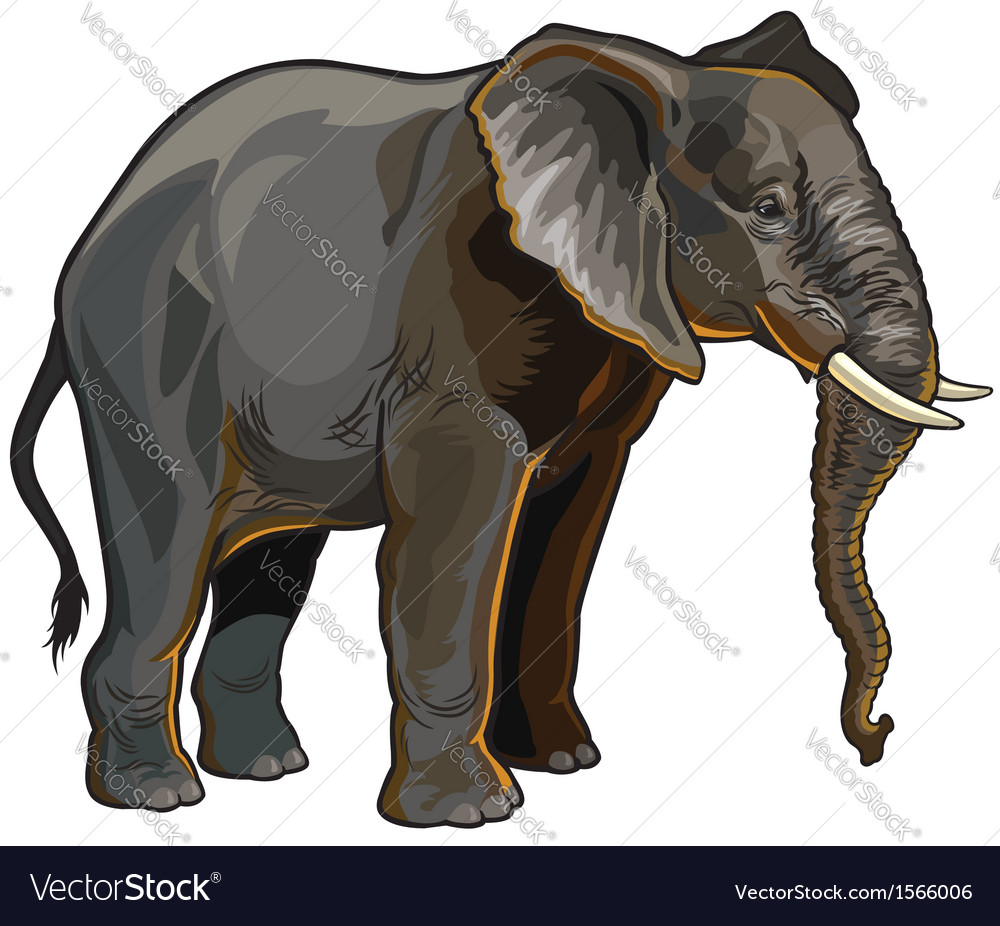 African elephant profile vector | Price: 3 Credit (USD $3)